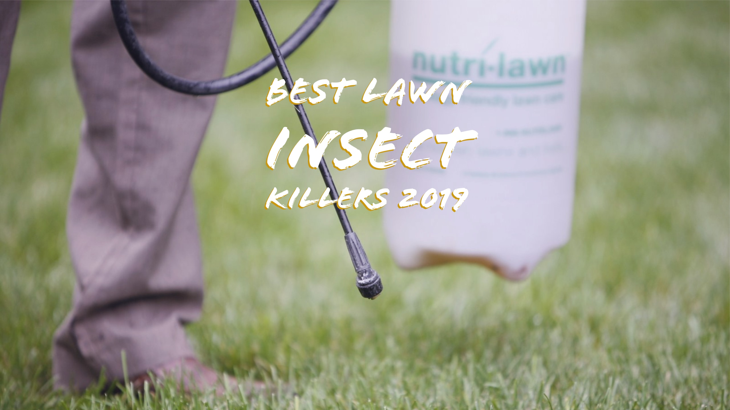 best lawn insect killers 2019