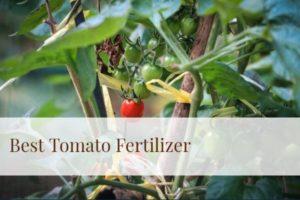 Best Tomato Fertilizer