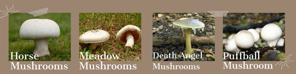 4 different types of mushroom that grown on lawn